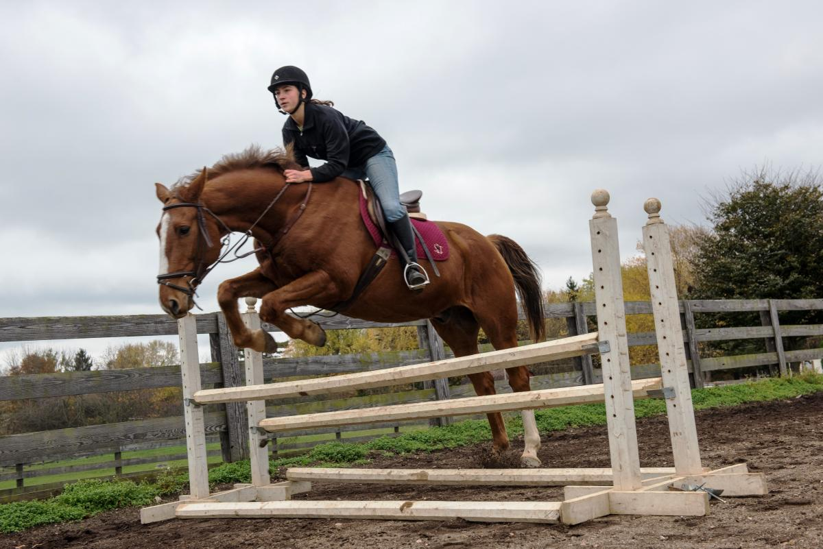 ATI equine student Jumping fences