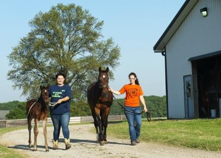 ATI students walking mare and foal