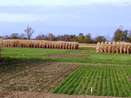Transitional organic research plots