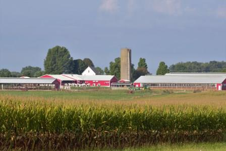 Looking across production field towards Krauss dairy